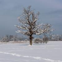 Winterlandschaften - Robenhauser Ried