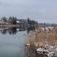 Winterlandschaften - Pfäffikersee