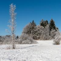 Winterlandschaften - Oberhöflerried
