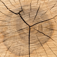 naturart - Holz 001